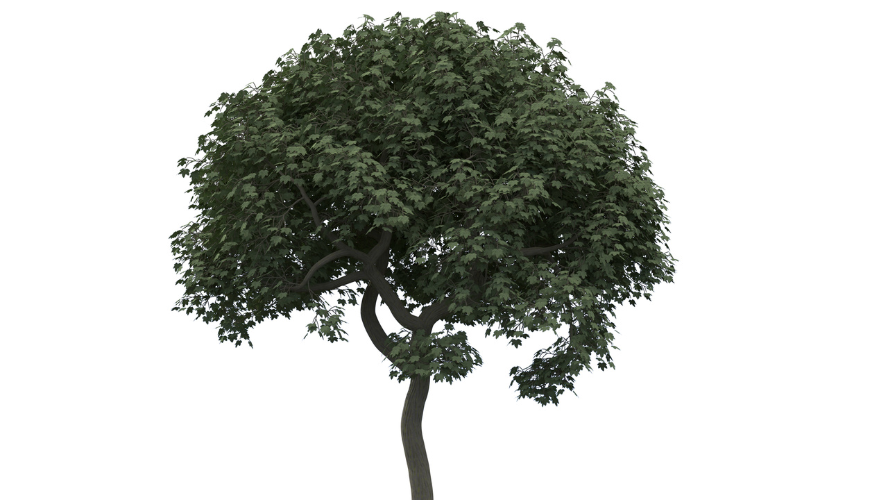 Some Trees Done With Tropism Foundry Community